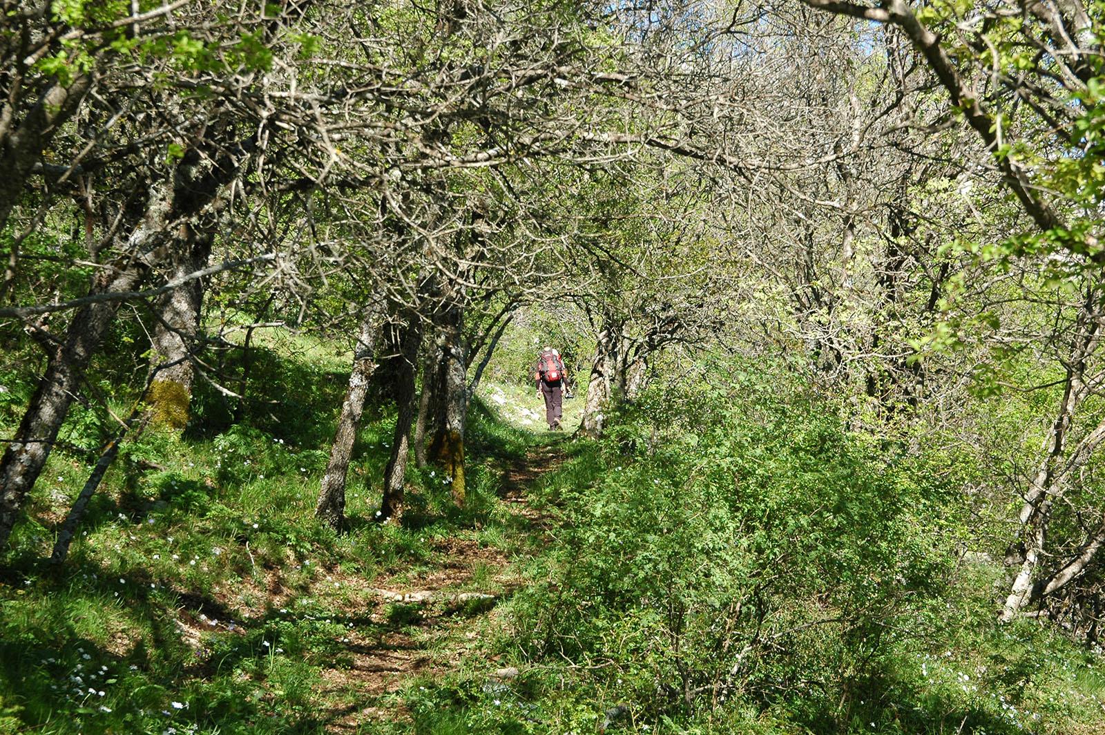 Cammino Basiliano: Alessandria del Carretto - Cerchiara di Calabria