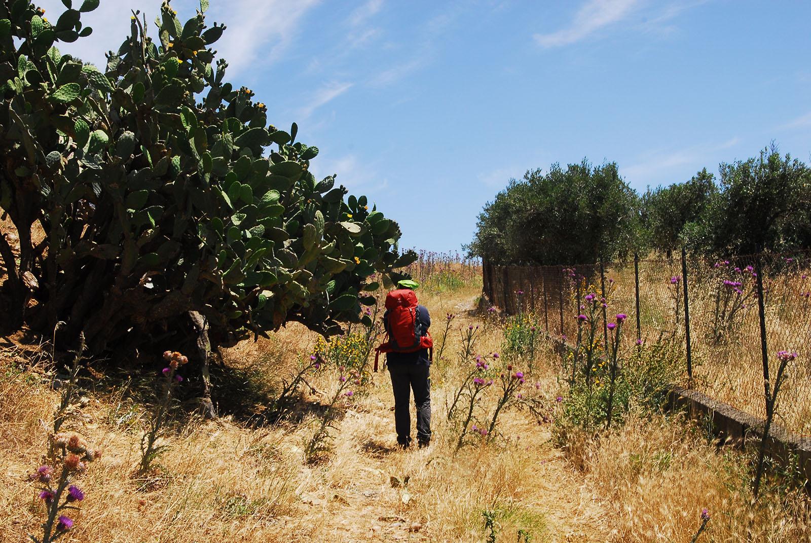 Cammino Basiliano: salita verso Torre Mordillo
