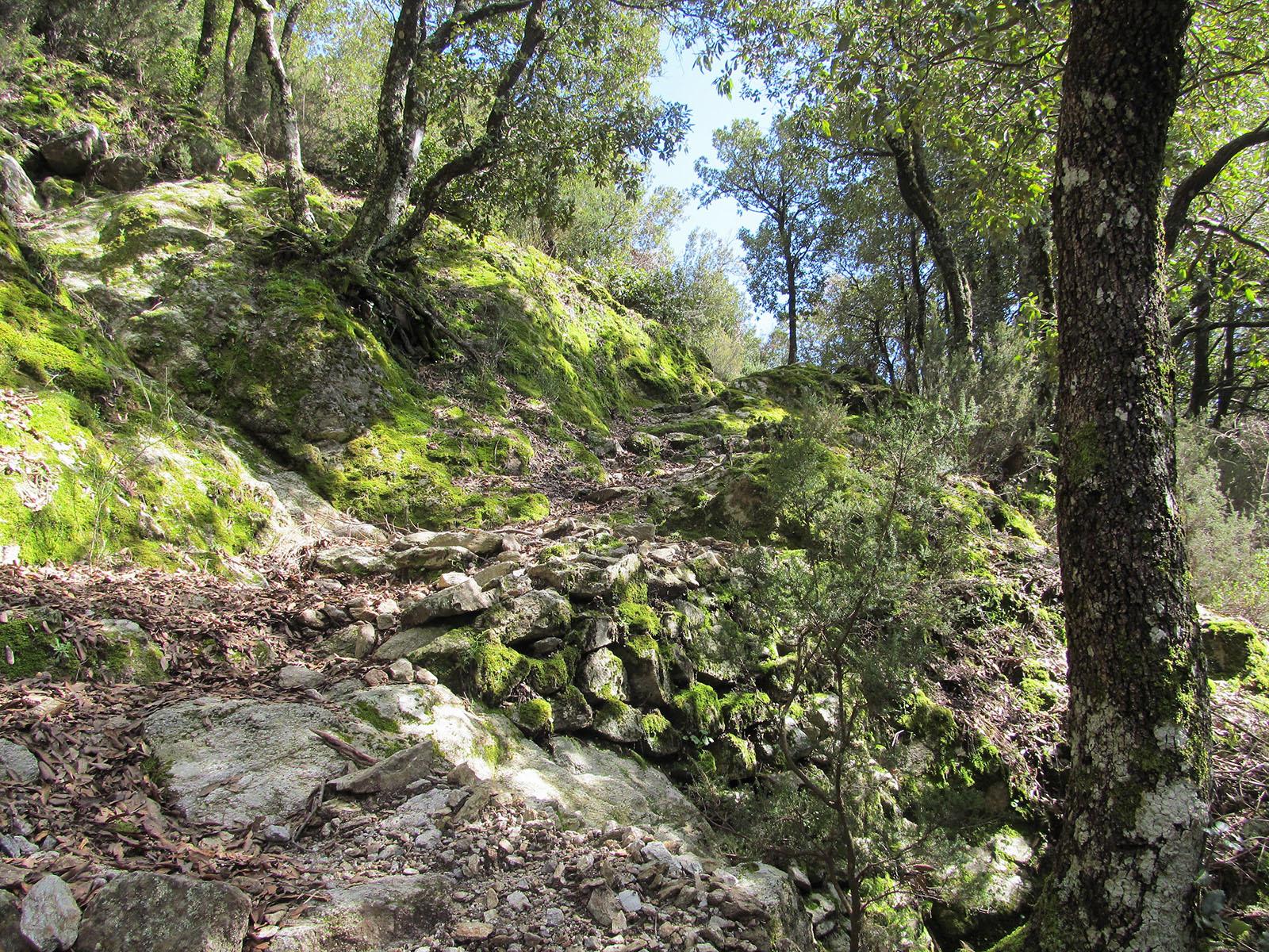 Cammino Basiliano: 35 Villaggio Mancuso - Pentone, sentiero