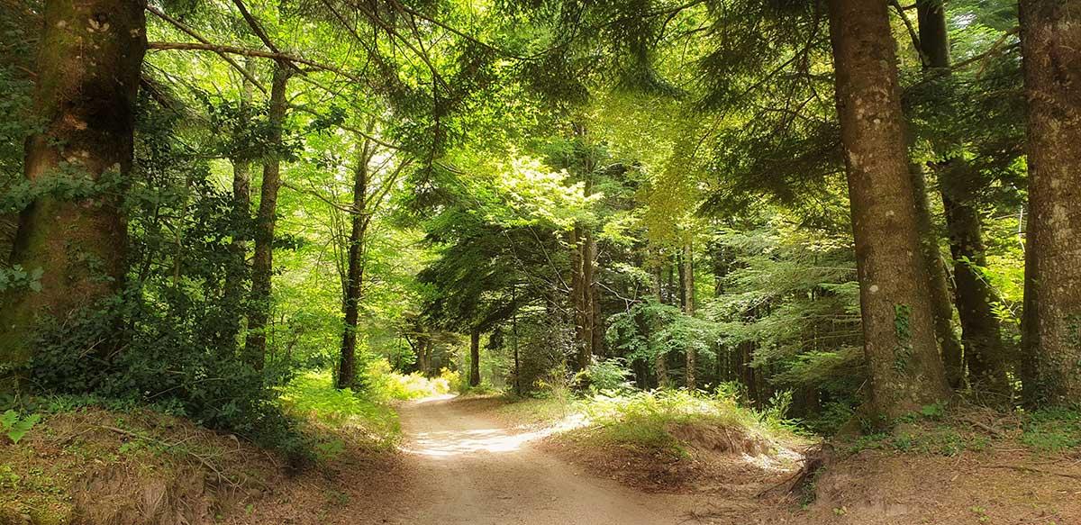 Cammino Basiliano: 49WILD bosco di Stilo