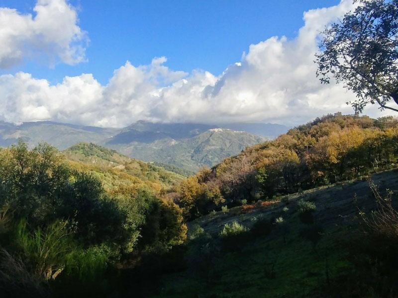 Panorama: sullo sfondo il borgo di Roccaforte e le montagne dell'Aspromonte