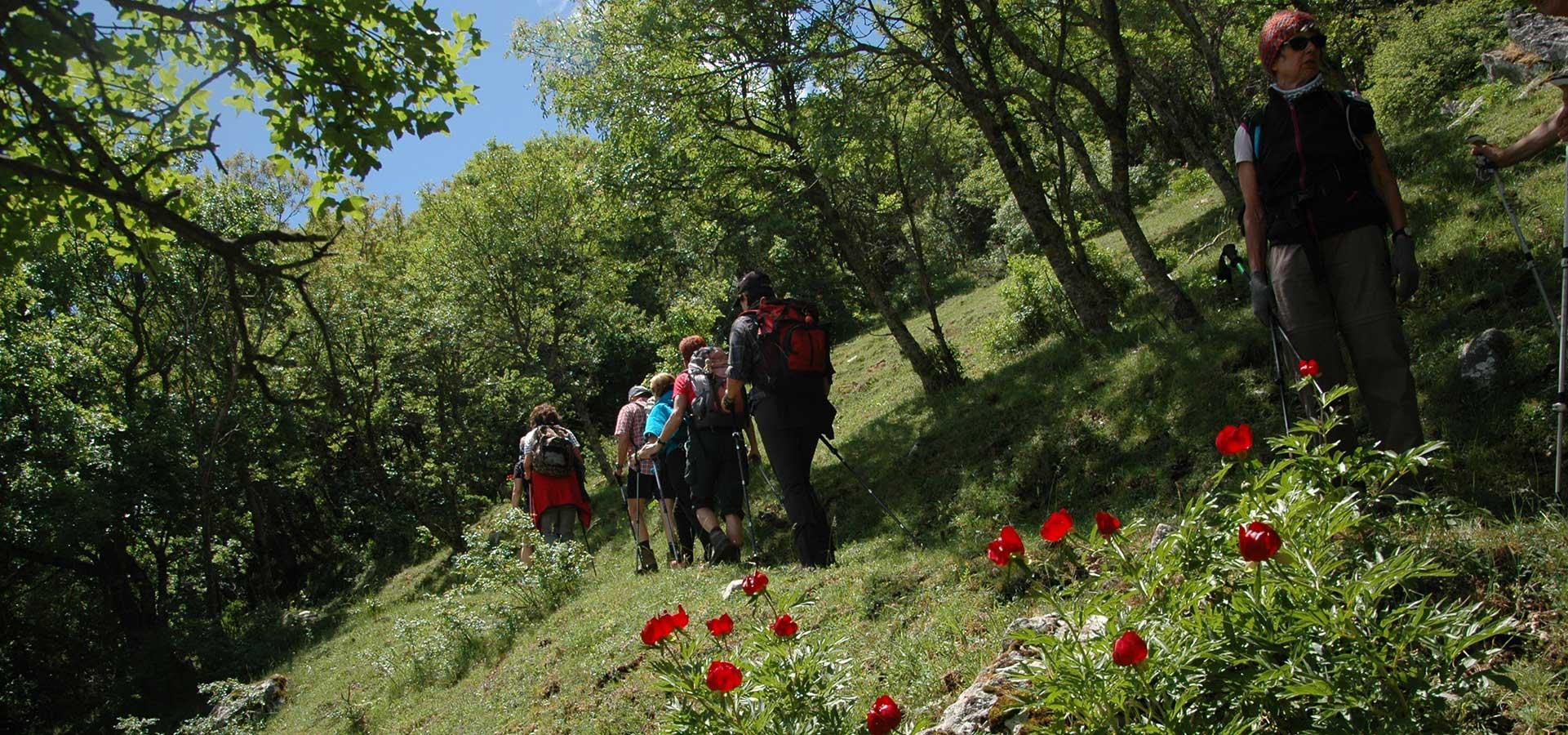 Cammino Basiliano: escursionisti tra le peonie