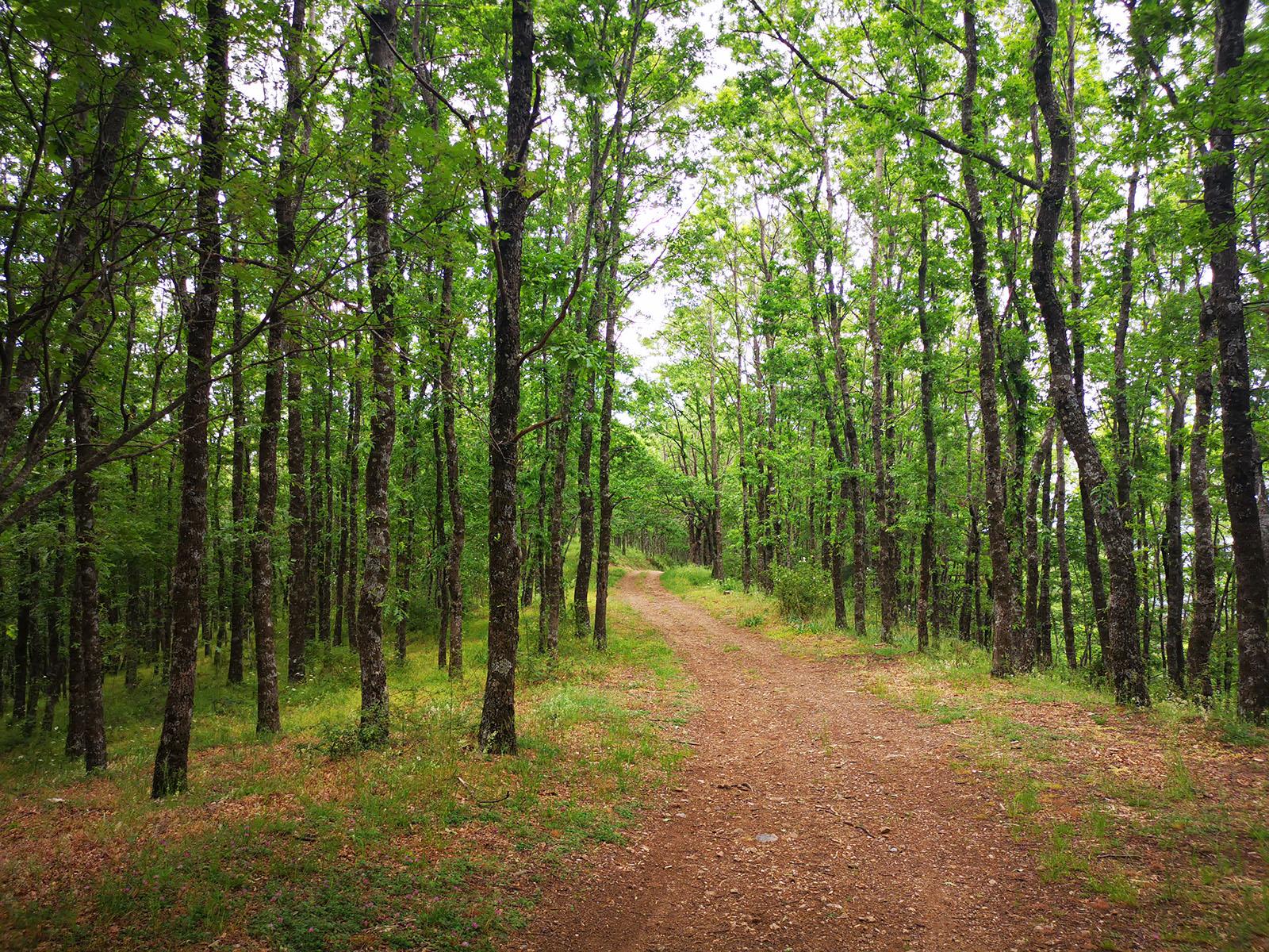 Cammino Basiliano: Oak trees' trail