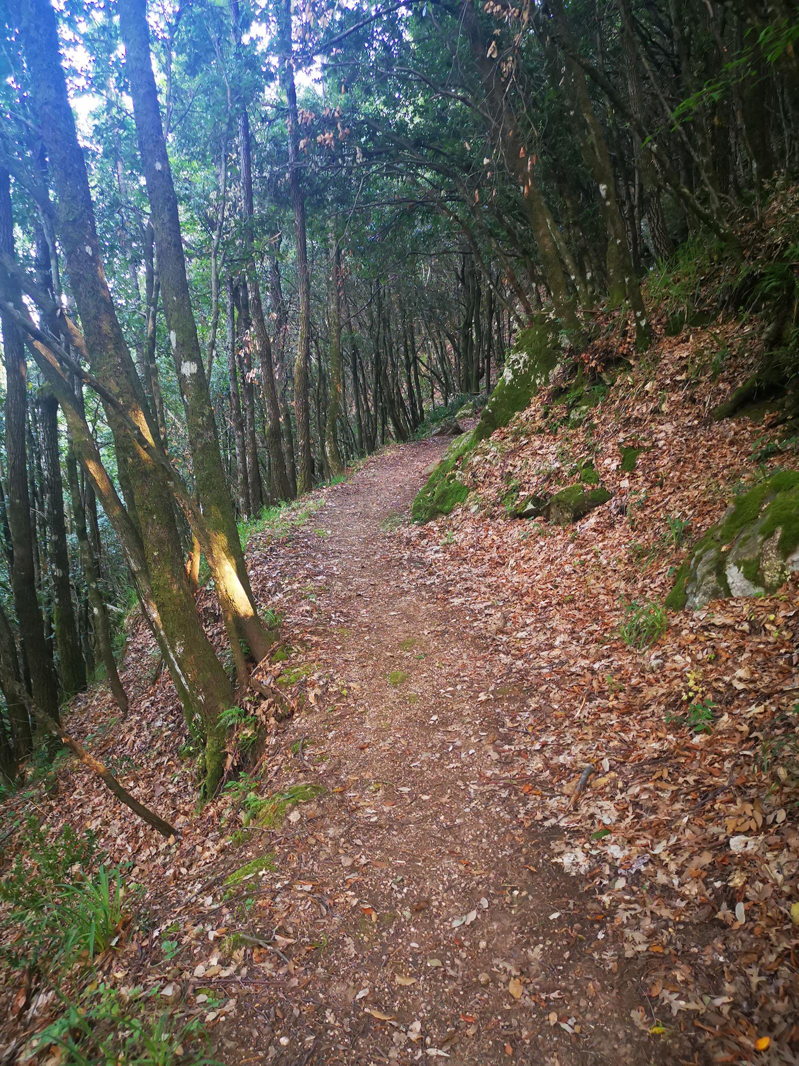 Cammino Basiliano: Trail Ciurrumele Sersale